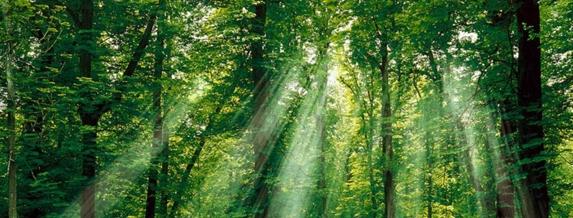 Дървета правят ток