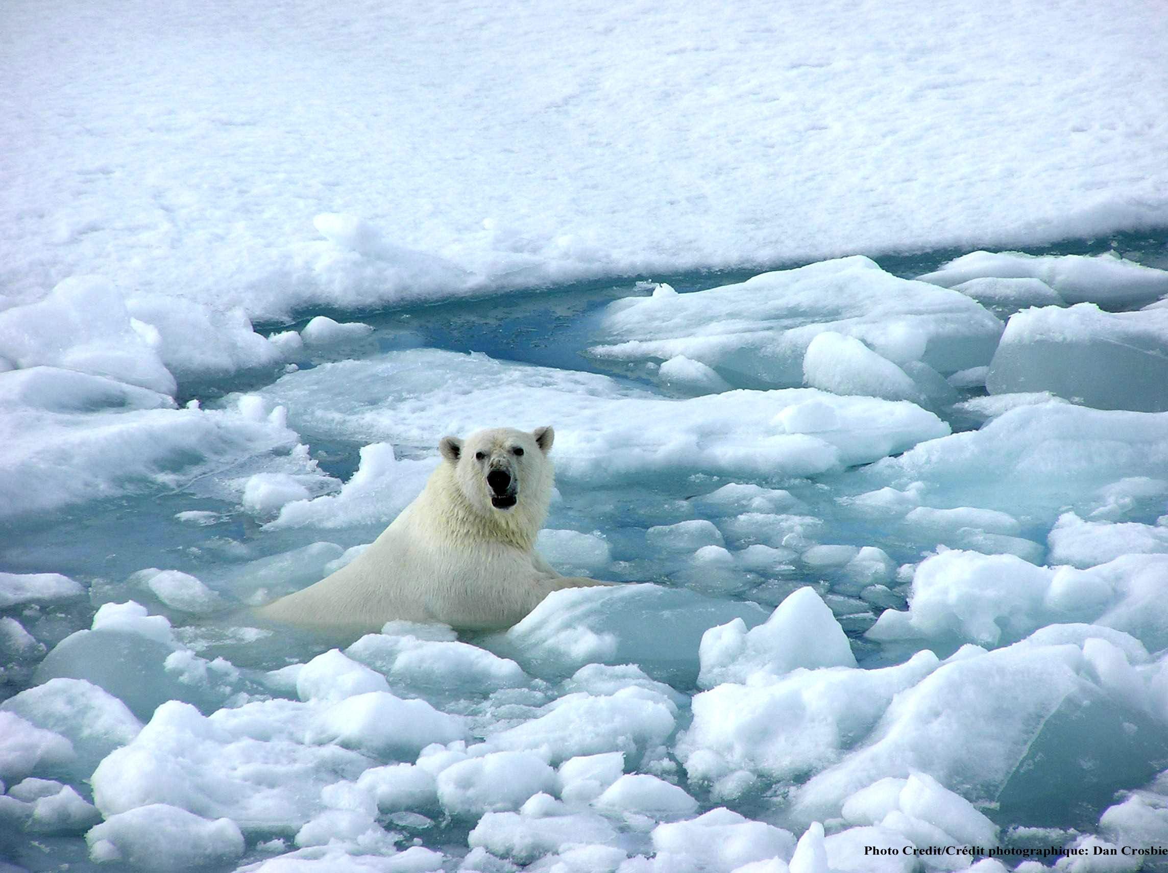 Учени: Топенето на ледовете в Антарктида е бързо и необратимо