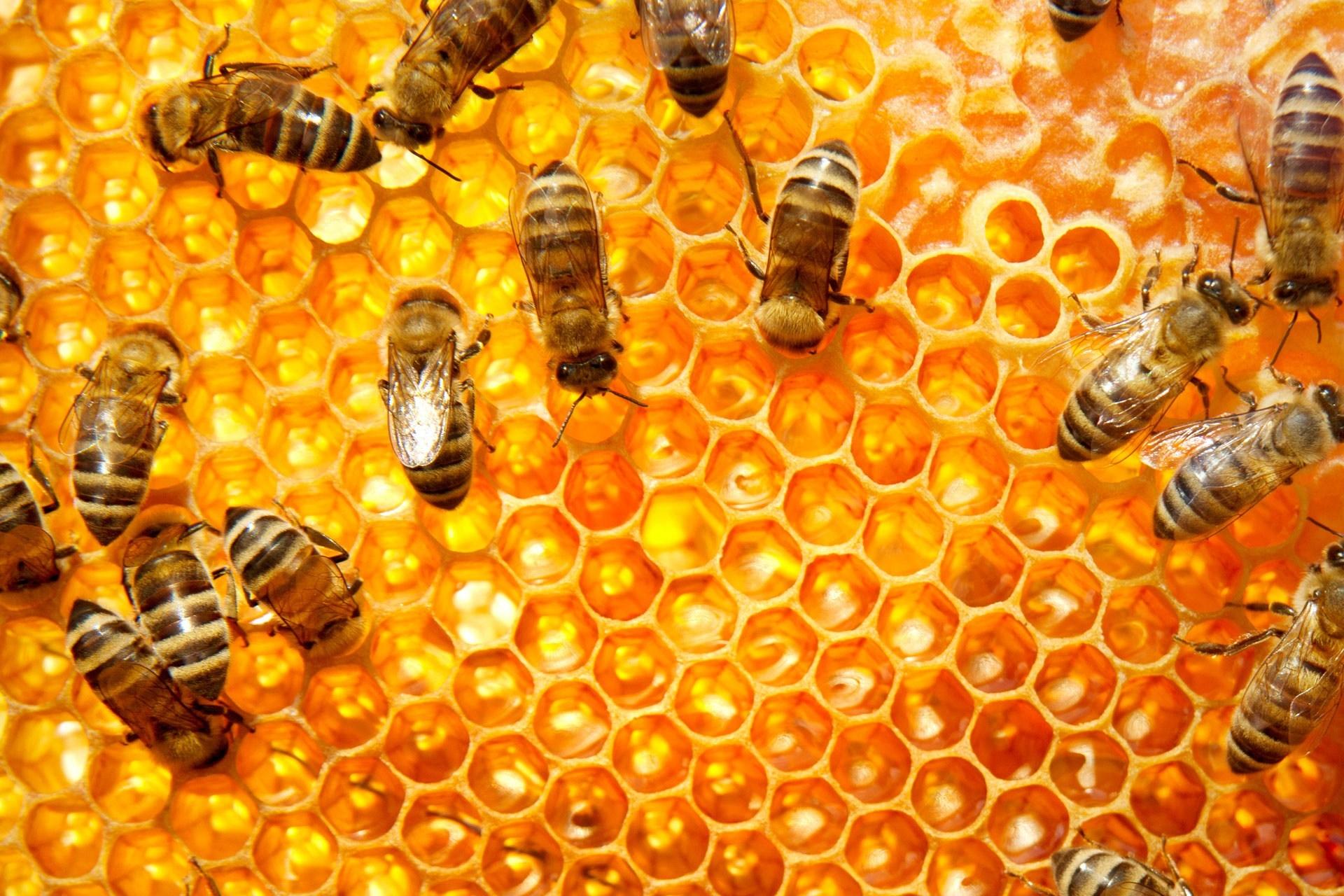 Лондон с национален план за опазване на пчелите