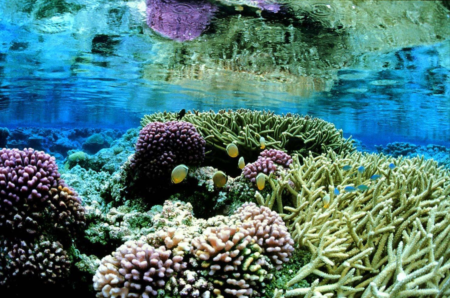 САЩ правят най-големия морски резерват в Тихия океан
