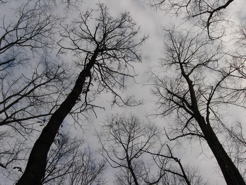 Еврокомисията започна процедура срещу България заради заменките на гори