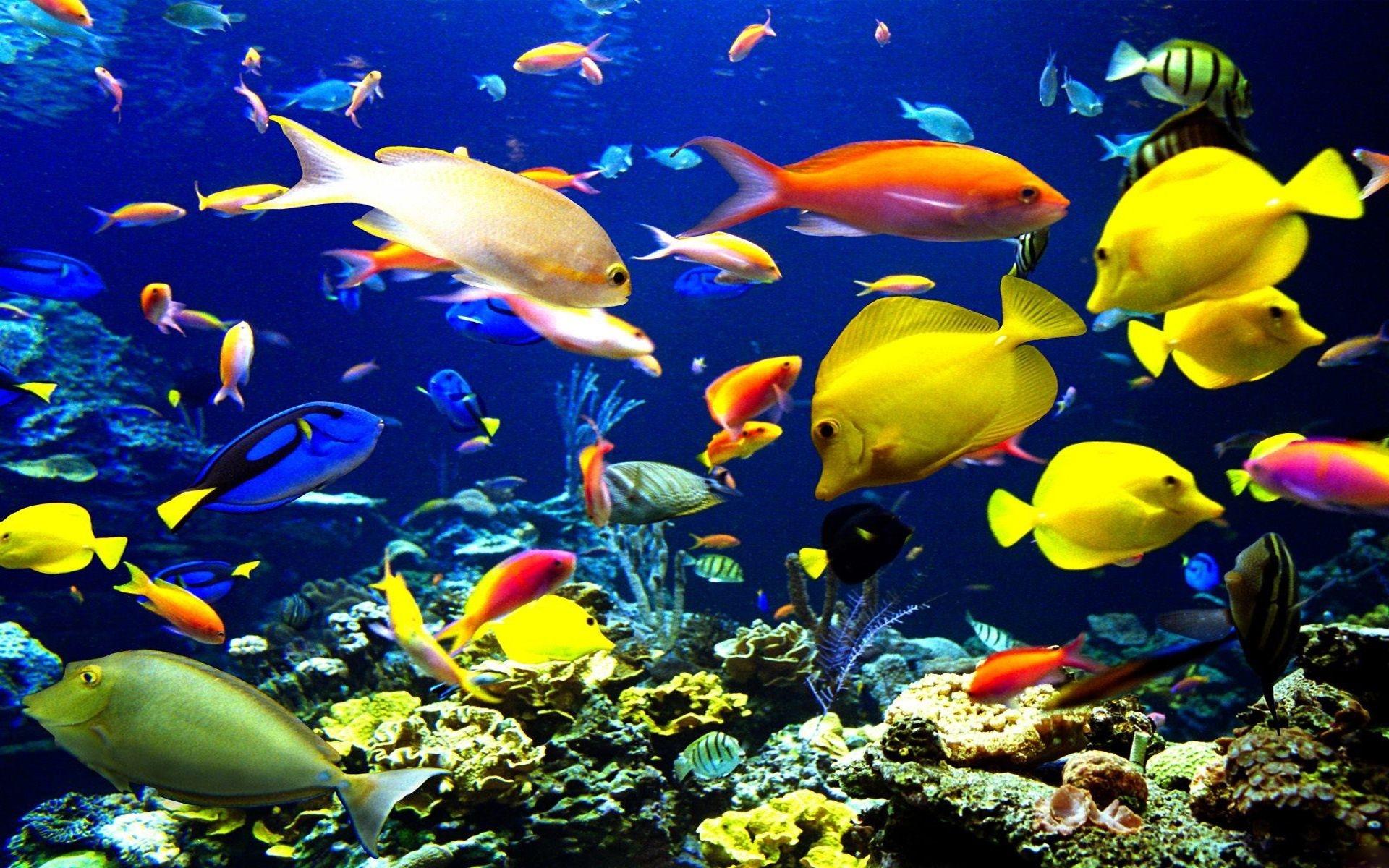 Рибите бягат от тропиците
