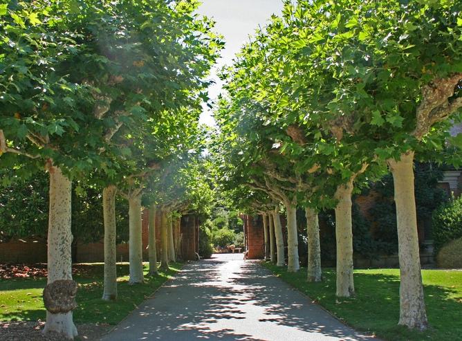 Инжекции в дърветата срещу сенната хрема в Австралия
