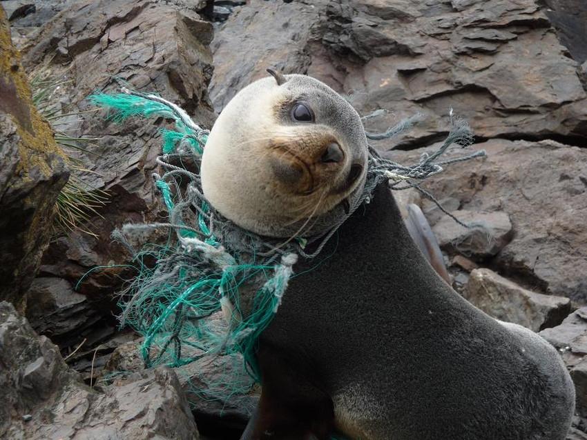 Изчезваща пластмаса – надеждата за бъдещето
