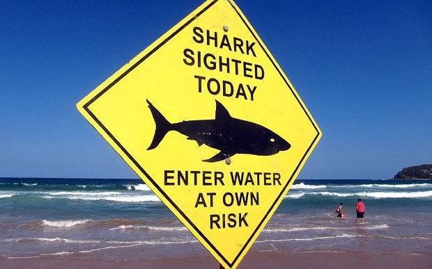 Австралия ще ползва дрони за следене на акули