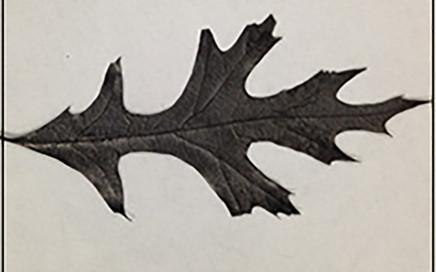 Учени направиха презареждаща се батерия от дъбово листо