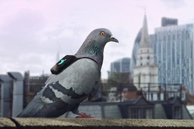 Гълъби екипирани с раници измерват нивото на замърсяване в Лондон