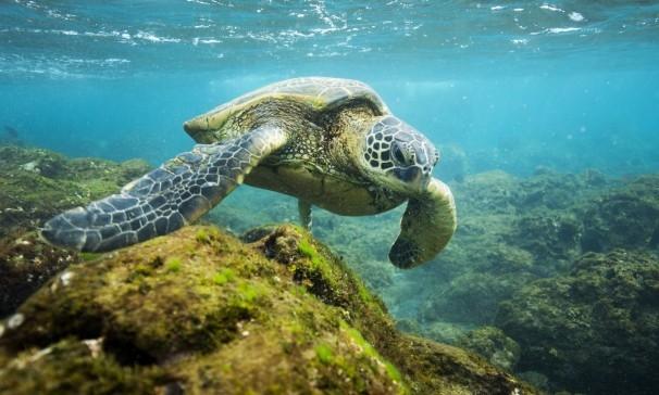 Обама учетвори морския резерват край Хаваите