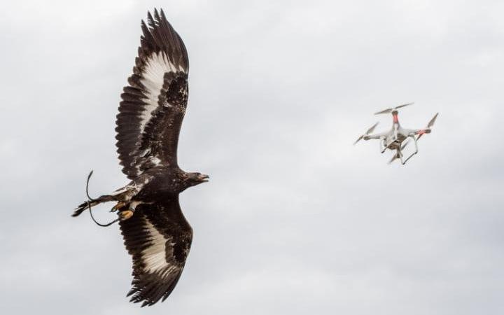 Франция ще бори дрони в нарушение с орли