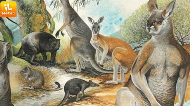 Човекът, а не климатът са убили мегаживотните в Австралия