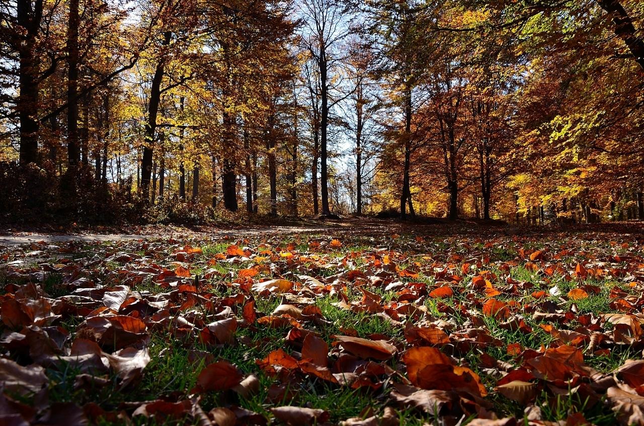 Буковите гори на Балкана – защитени от ЮНЕСКО
