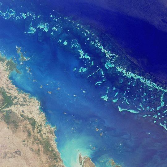 Успешна трансплантация на корали дава надежда за спасение на Големия бариерен риф