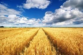 МЗХГ обобщи новите правила за наем на земеделски земи
