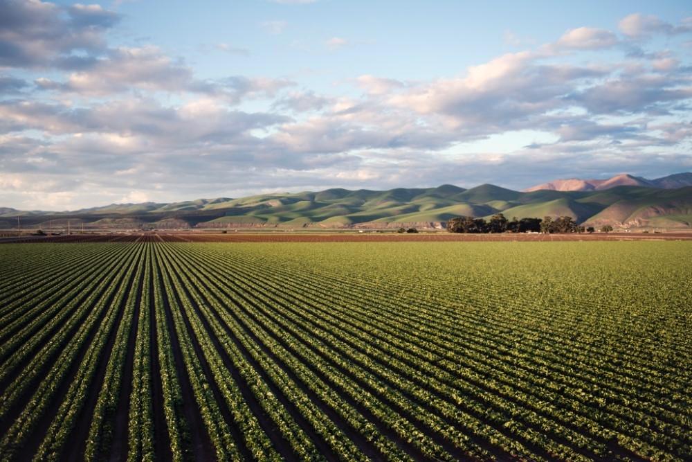 Обнародваха промени в нормативни актове, касаещи промяна на предназначението на земеделски земи