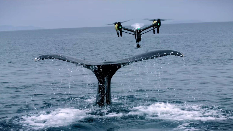 Мерят масата на китовете с дронове