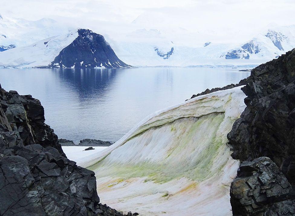 Британски учени картираха водораслите в Арктика