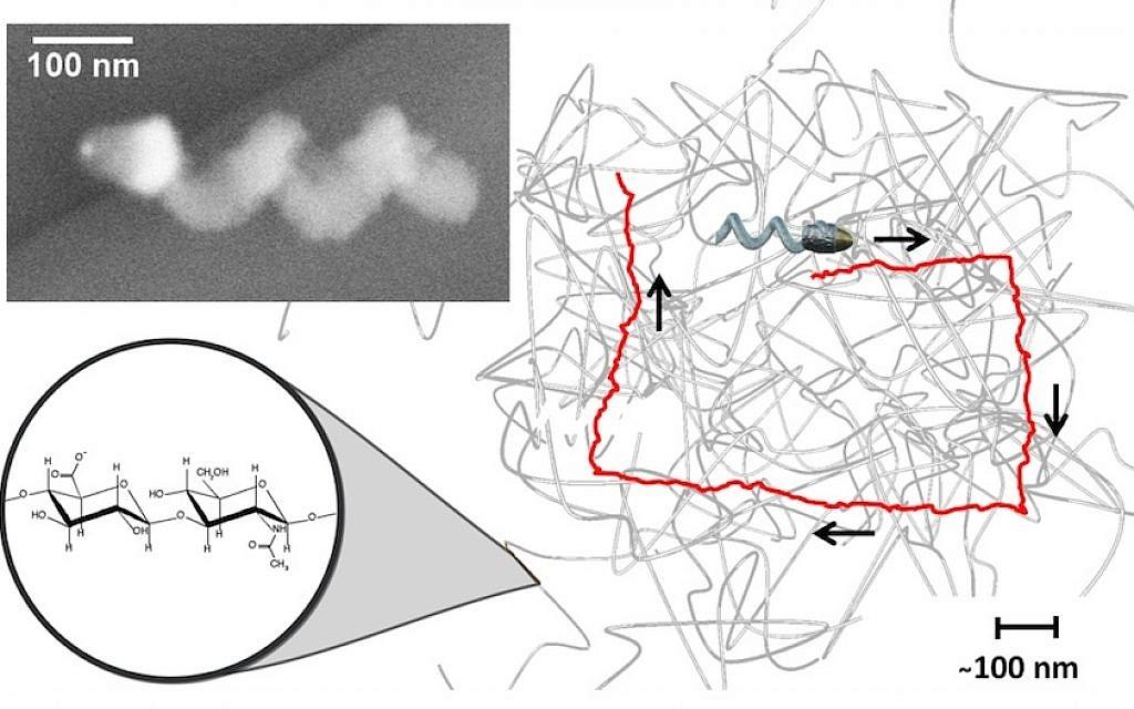 Нанопропелери стигат до клетките, за да лекуват