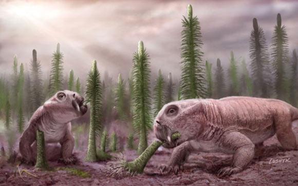Бивните на древно животно показват признаци на хибернация