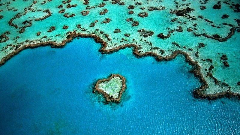 Австралийци откриха нов коралов риф