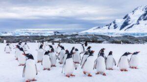 Record temperatures in Antarctica were measured