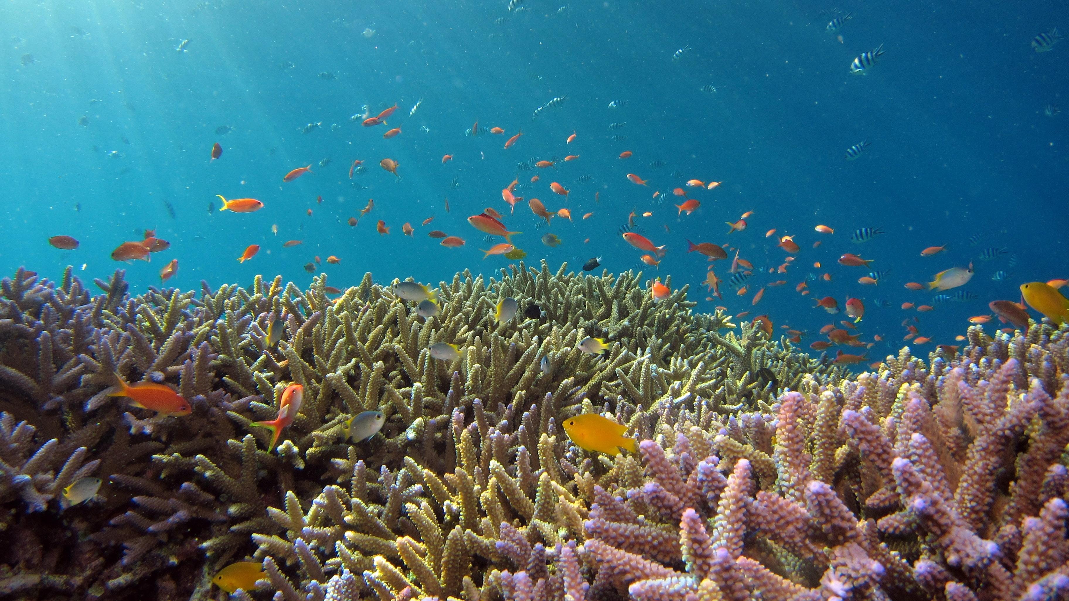 Направиха карта на кораловите рифове